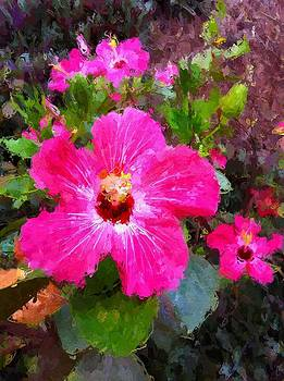 Pink Hibiscus by Lyn Pacific