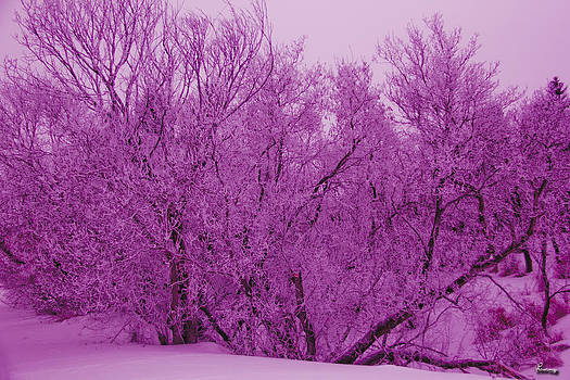 Pink Hoar Frost by Andrea Lawrence