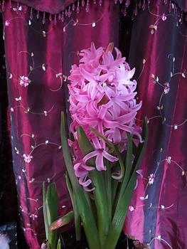 Pink Hyacinth by Elisabeth Ann