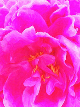 Ann Tracy - Pink Joy