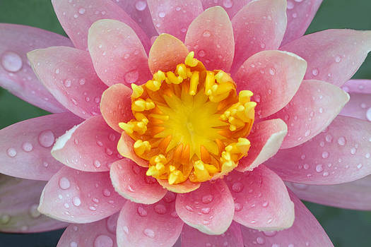 Pink by Karen Walzer