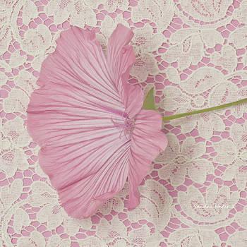 Sandra Foster - Pink Lavatera Blossom On Vintage Lace - Macro