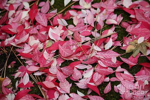 Danielle Groenen - Pink Leaves