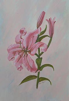 Pink Lilium by Aileen McLeod