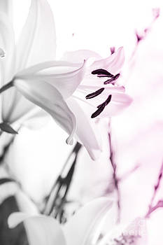 Alanna DPhoto - Pink Lily Feature