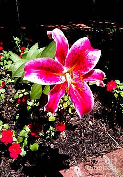 Pink Lily by Simonne Mina