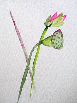 Pink Lotus  by Sacha Grossel