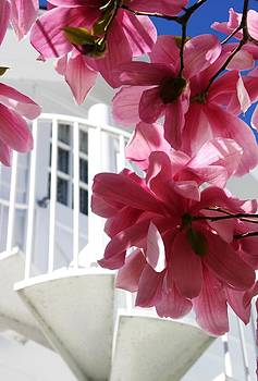 Robin Mahboeb - pink magnolias and white spiral stairs