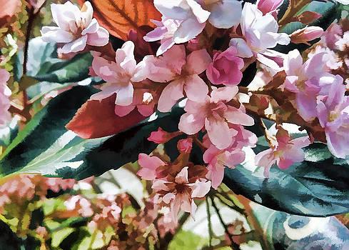 Donna Proctor - Pink Majestic Beauty