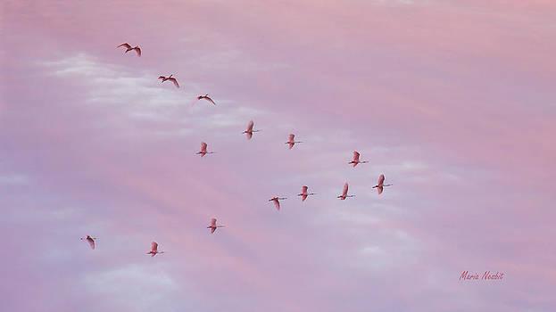Pink by Maria Nesbit