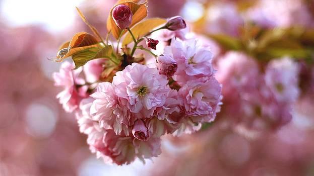 Pink by Matthew Grice