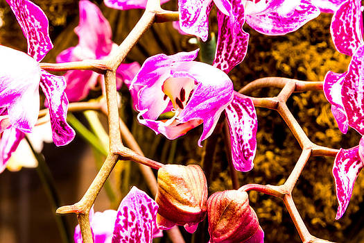 Pink orchid flower  by Tibor Co