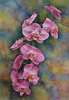 Pink Orchids by Kate Lagaly
