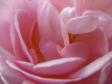 Pink Pearls by Karen Casey-Smith