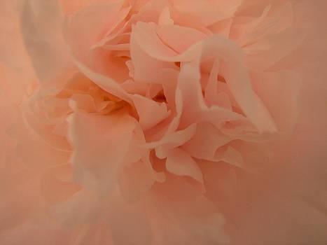 Dale Kauzlaric - Peach Peony