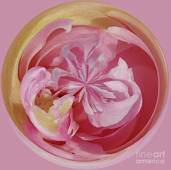 Pink Peoy Orb by Cindi Ressler