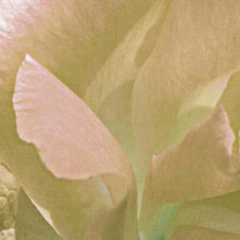 Bamalam  Photography - Pink Petals