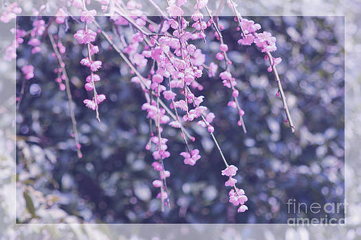 Beverly Claire Kaiya - Pink Plum Blossoms with Violet Tones