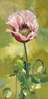 Alfred Ng - pink poppy