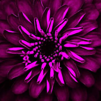 Pink Purple Glow Flower by Donna Betancourt