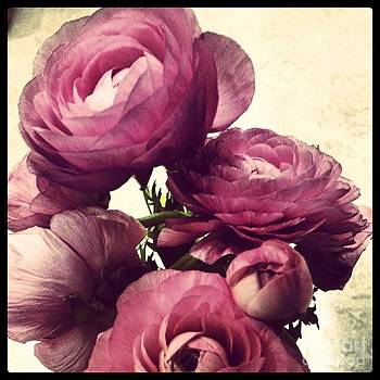 Pink  Ranunculus by Heather L Wright