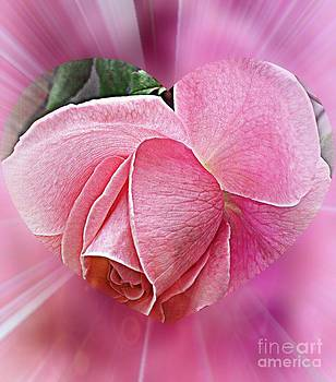 Pink Ribbons Of Light by Judy Palkimas
