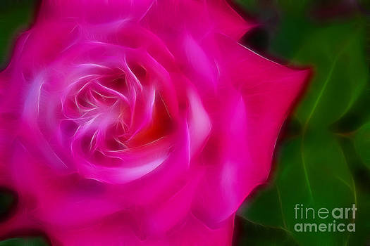 Gary Gingrich Galleries - Pink Rose 6238