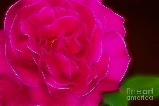 Gary Gingrich Galleries - Pink Rose 6326-Fractal
