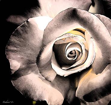 Pink Rose by Jennifer Cadence Spalding