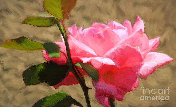 Pink Rose Oil Painting  by Heinz G Mielke