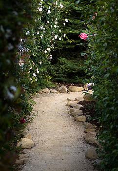 John Daly - Pink Rose Path