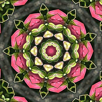 Valerie Kirkwood - Pink Rosebud Kaleidoscope