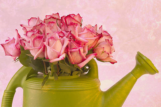 Sandra Foster - Pink Roses In Green Watering Can