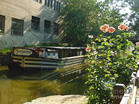 Paddy Shaffer - Pink Roses Over Georgetown Canal