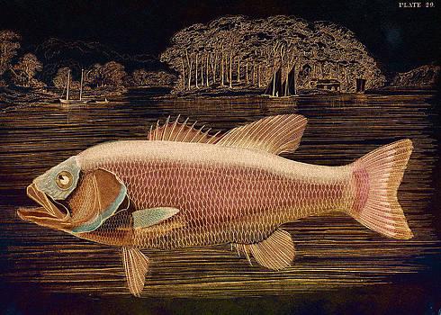 Pink Salmon by Sarah Vernon