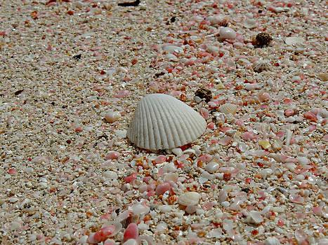 Kimberly Perry - Pink Sand Beach Shells
