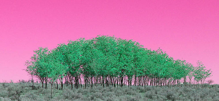 Pink Sky Trees by Susan Porter