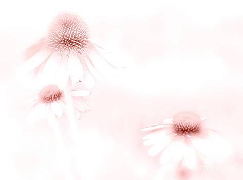 Pink Sonata  by Andrea Kollo