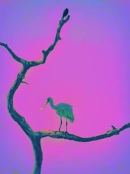 Pink Spoonbill by David Mckinney