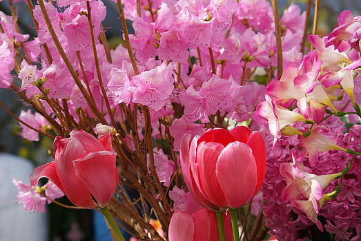Pink Spring by Lindy Whiton