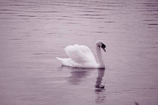 Laurie Perry - Pink Swan
