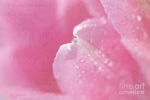 Pink Tulip by Cindi Ressler