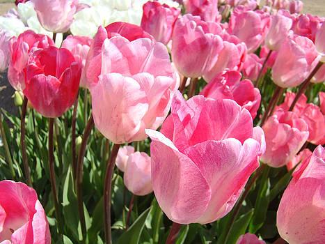 Baslee Troutman - Pink Tulip Flowers Garden Art Prints
