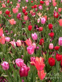 Sherri Williams - Pink Tulips