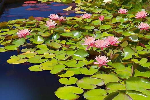 Cliff Wassmann - Pink Waterlilies