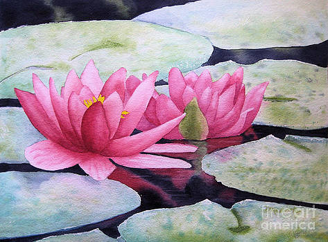 Pink Waterlilies by Diane Marcotte