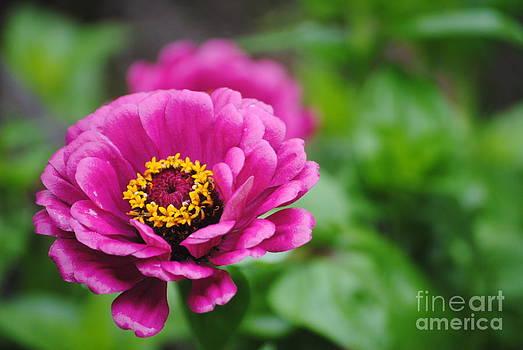 TChamberlin Photography - Pink Wonder