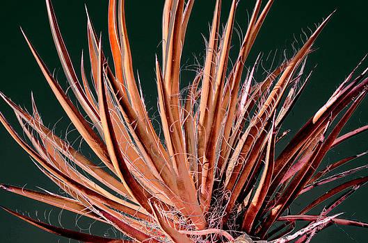 Pink Yucca by Lee Scott