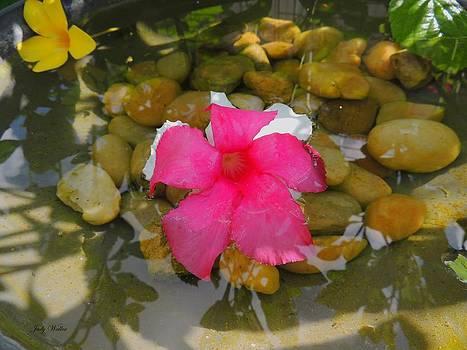 Pink Zen by Judy  Waller