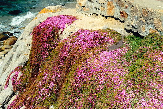 Pinks On The Rocks by Phyllis Kaltenbach